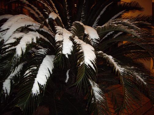 palmsnow.jpg